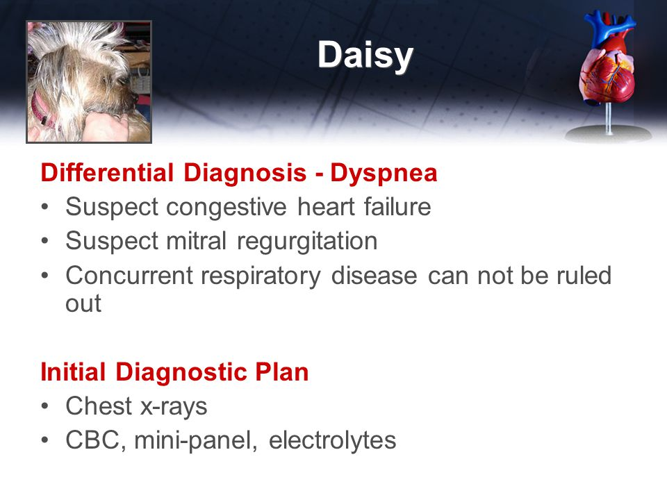 Daisy Differential Diagnosis - Dyspnea