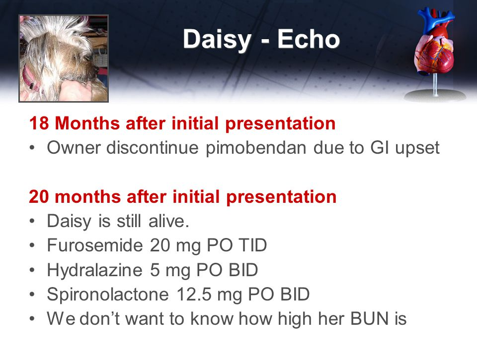 Daisy - Echo 18 Months after initial presentation