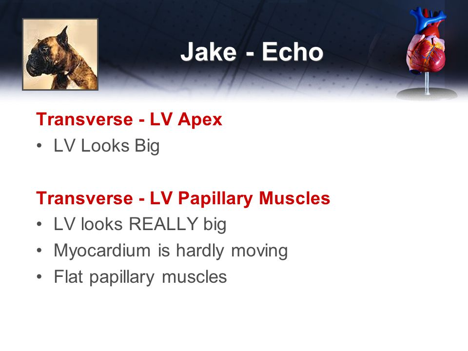 Jake - Echo Transverse - LV Apex LV Looks Big