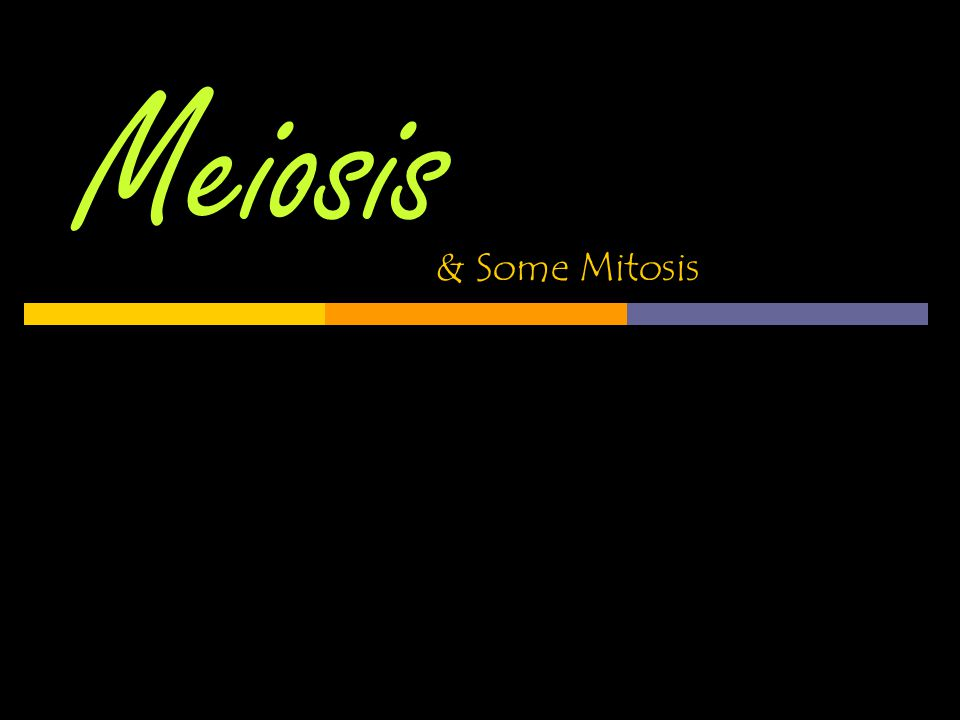 Meiosis & Some Mitosis