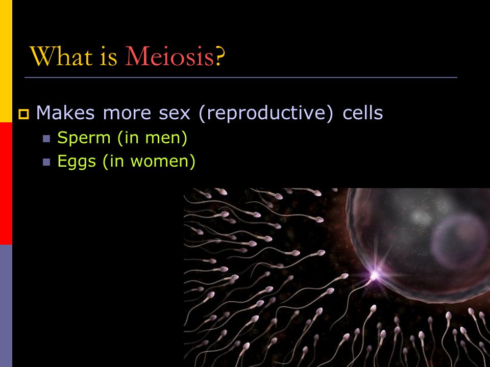 What is Meiosis Makes more sex (reproductive) cells Sperm (in men)