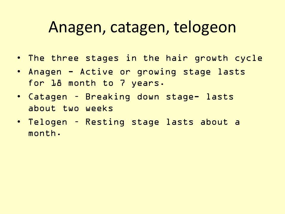 Anagen, catagen, telogeon