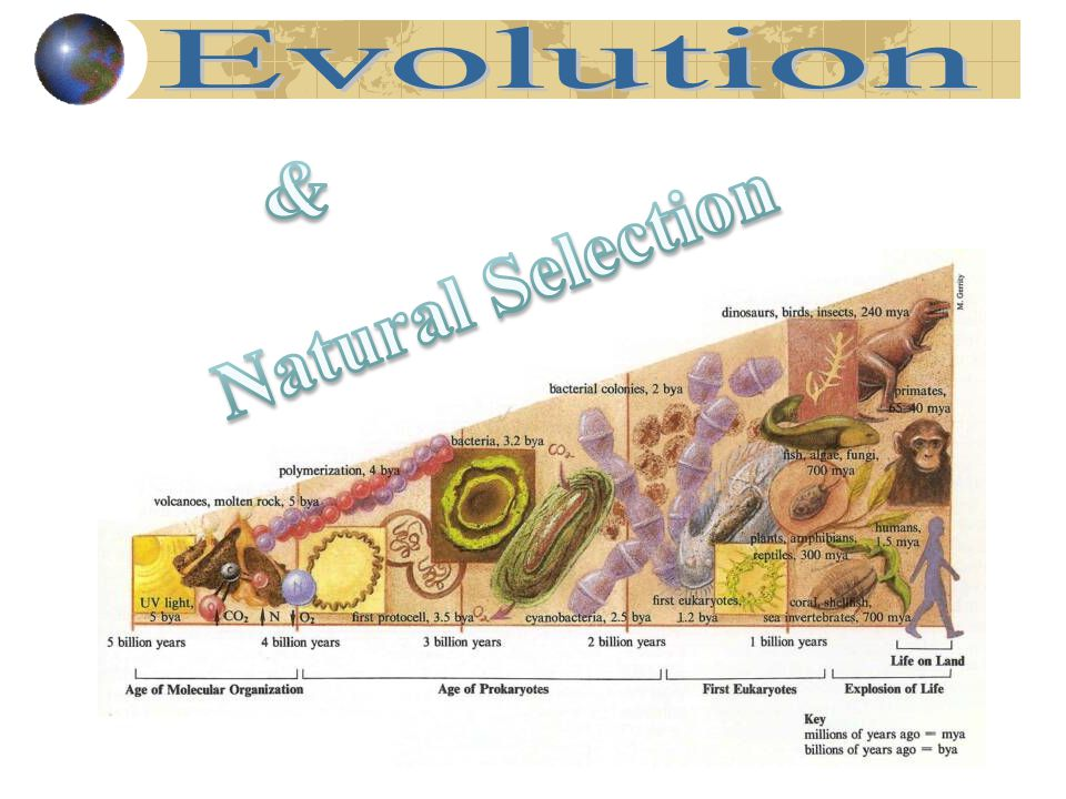 Evolution & Natural Selection