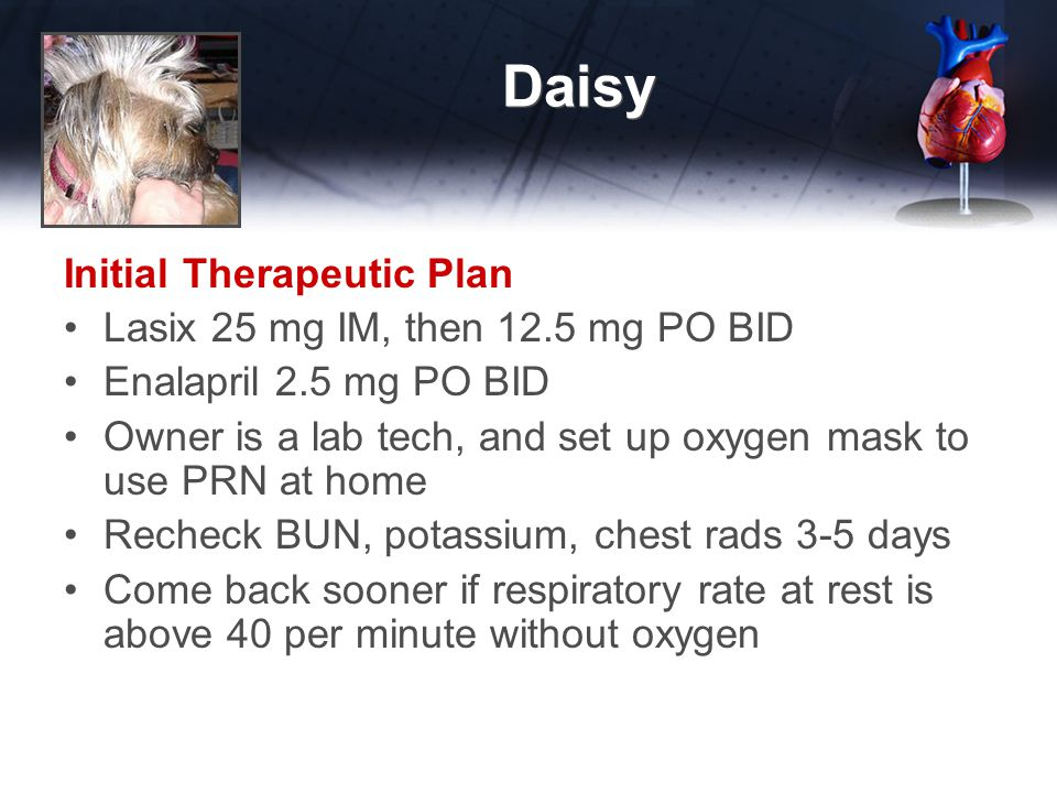 Daisy Initial Therapeutic Plan Lasix 25 mg IM, then 12.5 mg PO BID