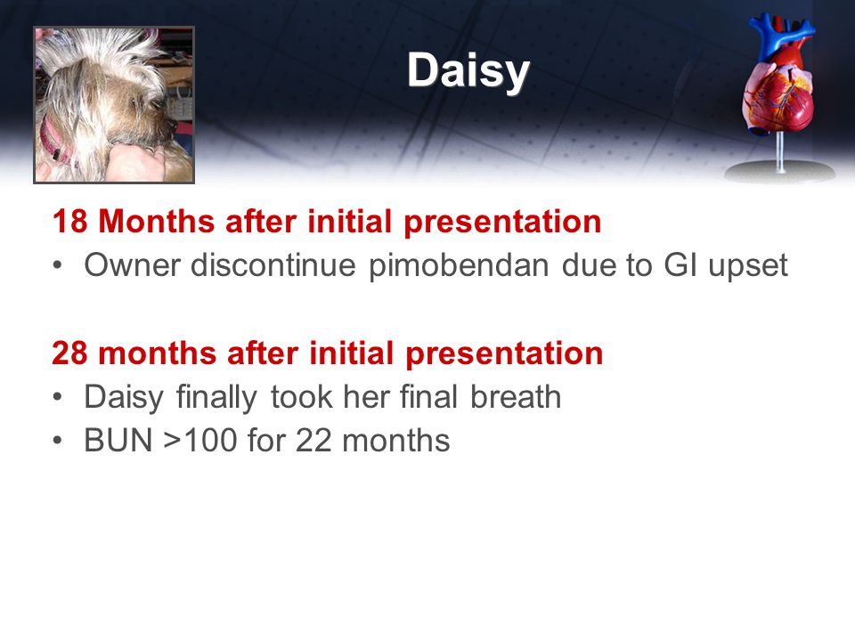 Daisy 18 Months after initial presentation