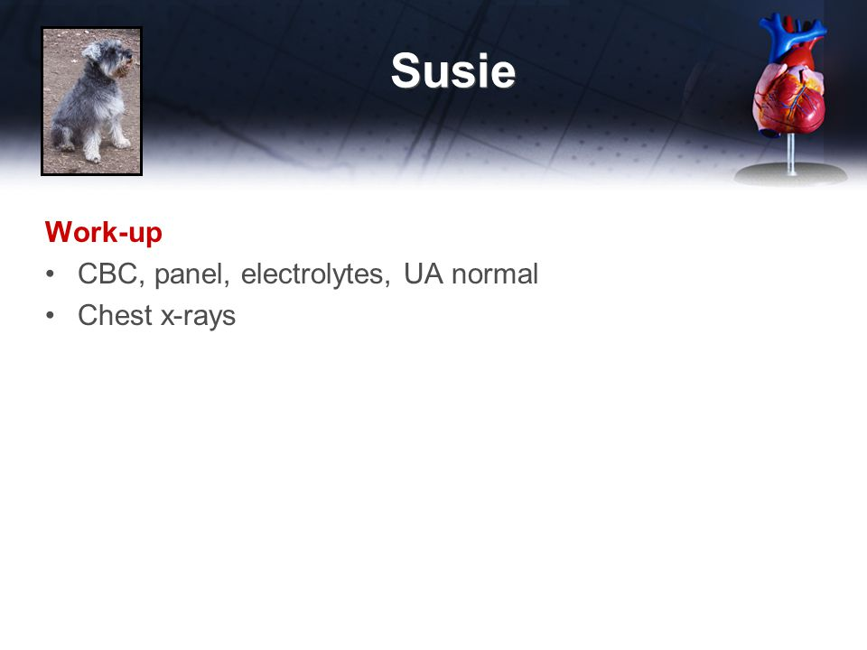 Susie Work-up CBC, panel, electrolytes, UA normal Chest x-rays