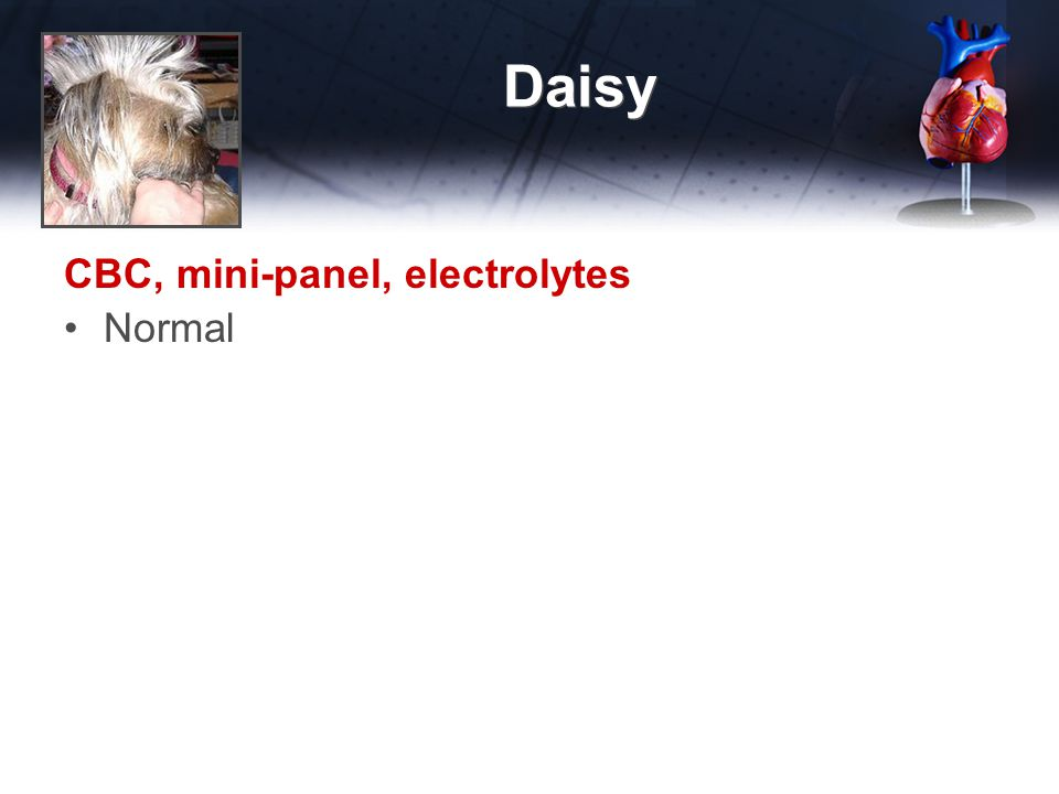 Daisy CBC, mini-panel, electrolytes Normal