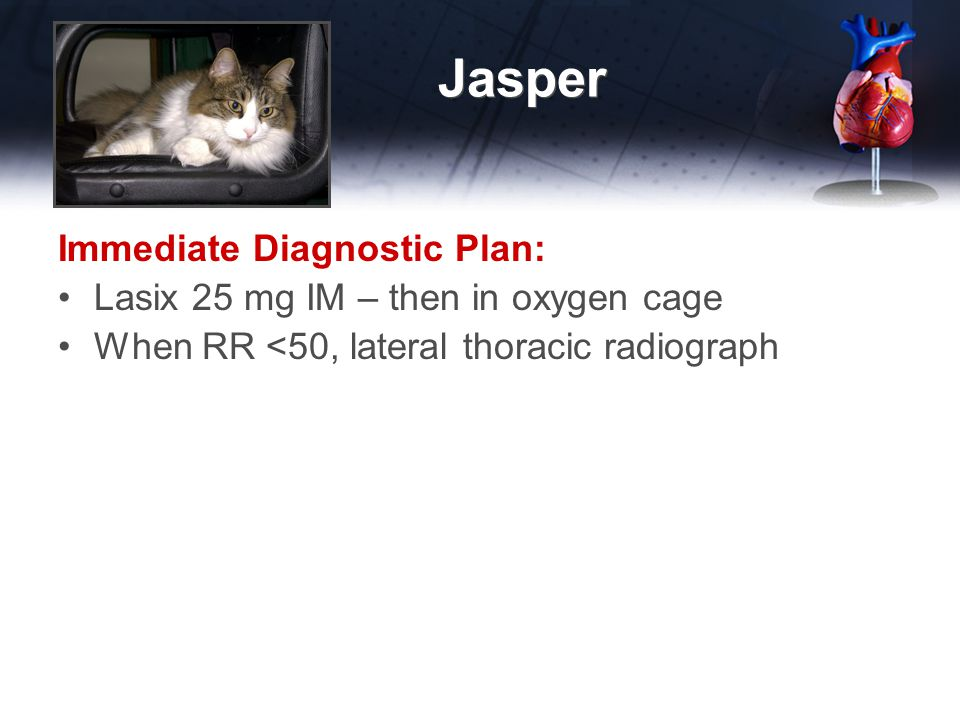 Jasper Immediate Diagnostic Plan: Lasix 25 mg IM – then in oxygen cage