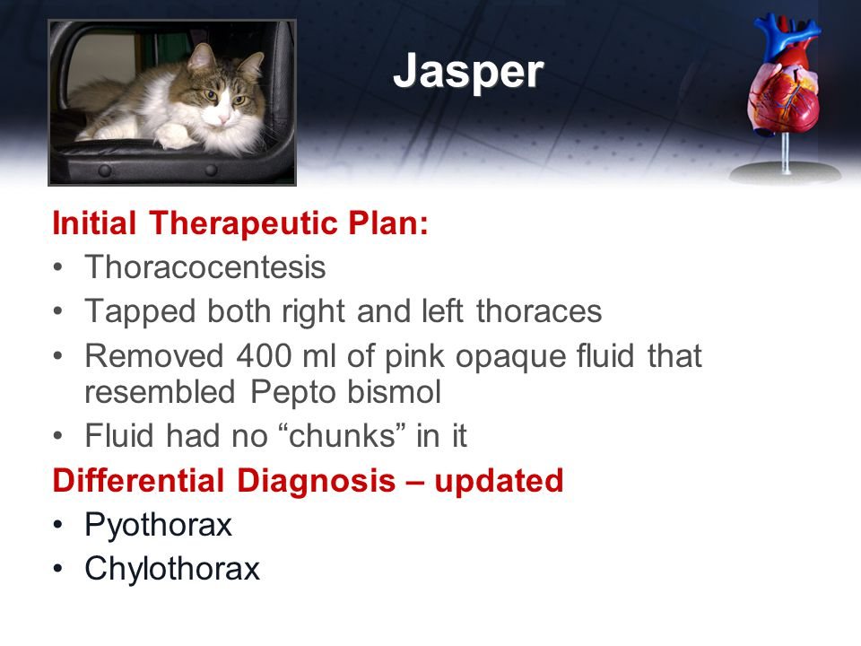 Jasper Initial Therapeutic Plan: Thoracocentesis