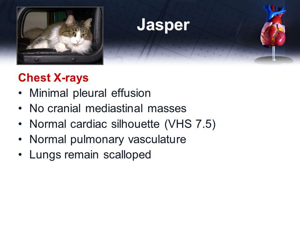 Jasper Chest X-rays Minimal pleural effusion