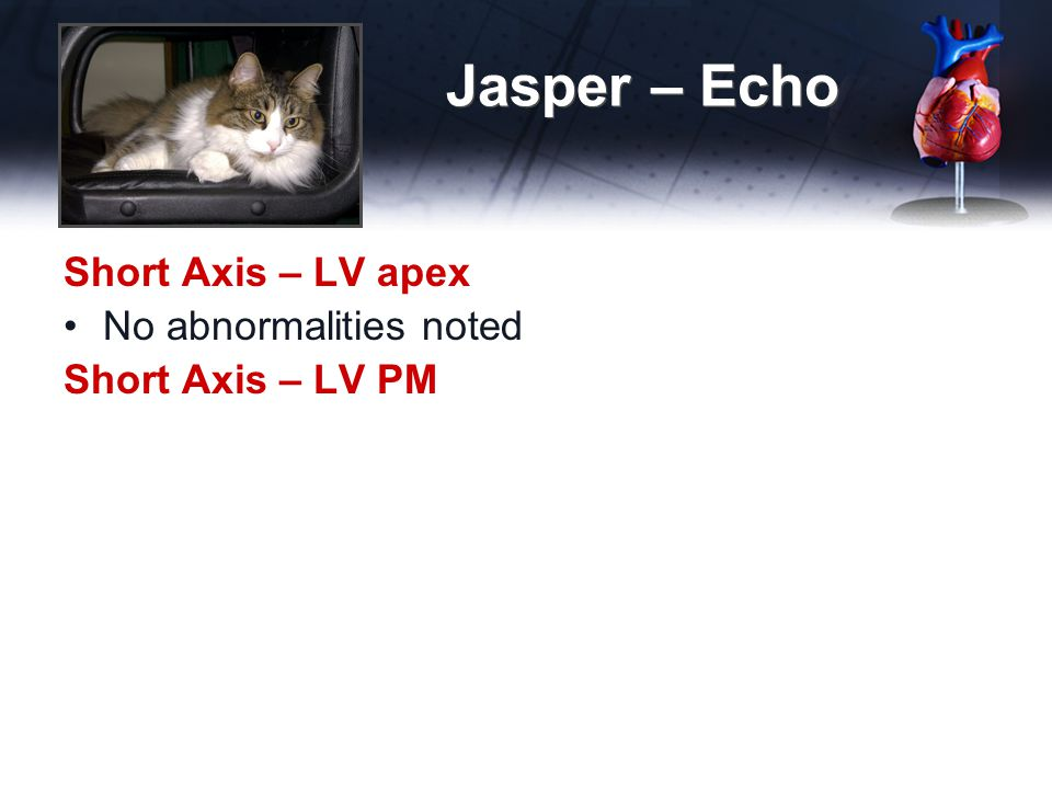 Jasper – Echo Short Axis – LV apex No abnormalities noted