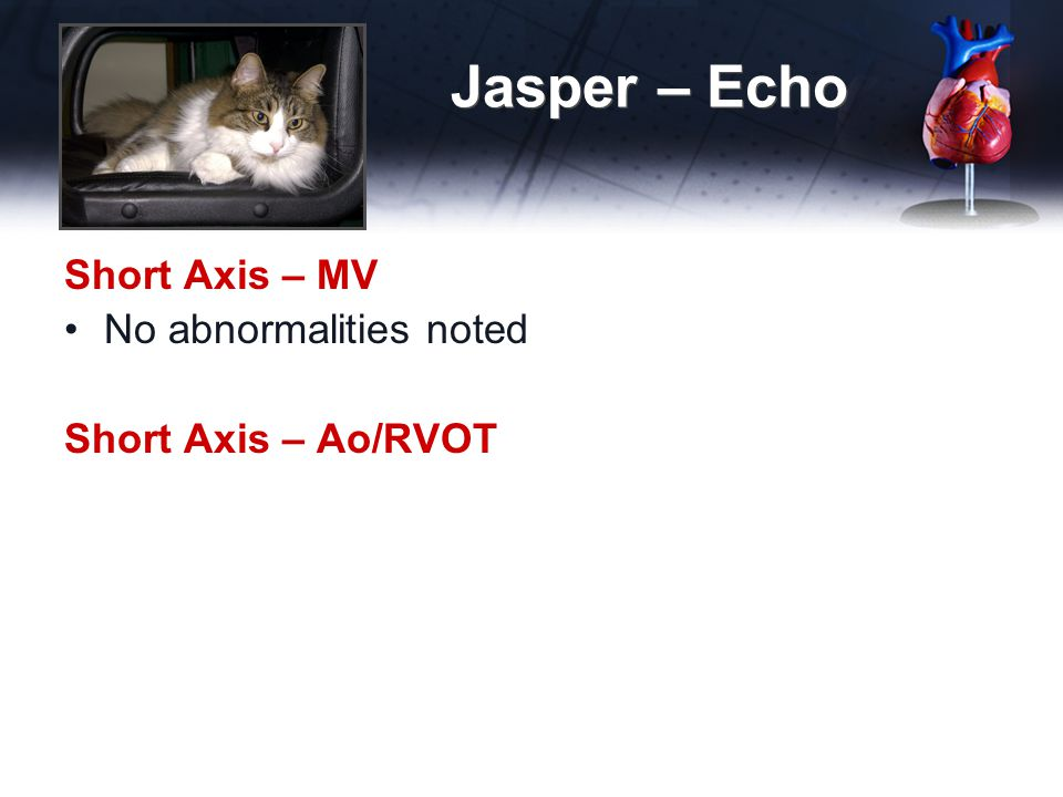 Jasper – Echo Short Axis – MV No abnormalities noted