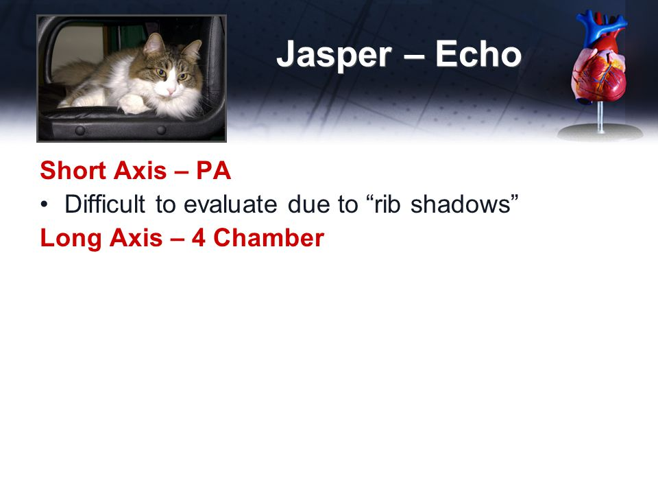 Jasper – Echo Short Axis – PA