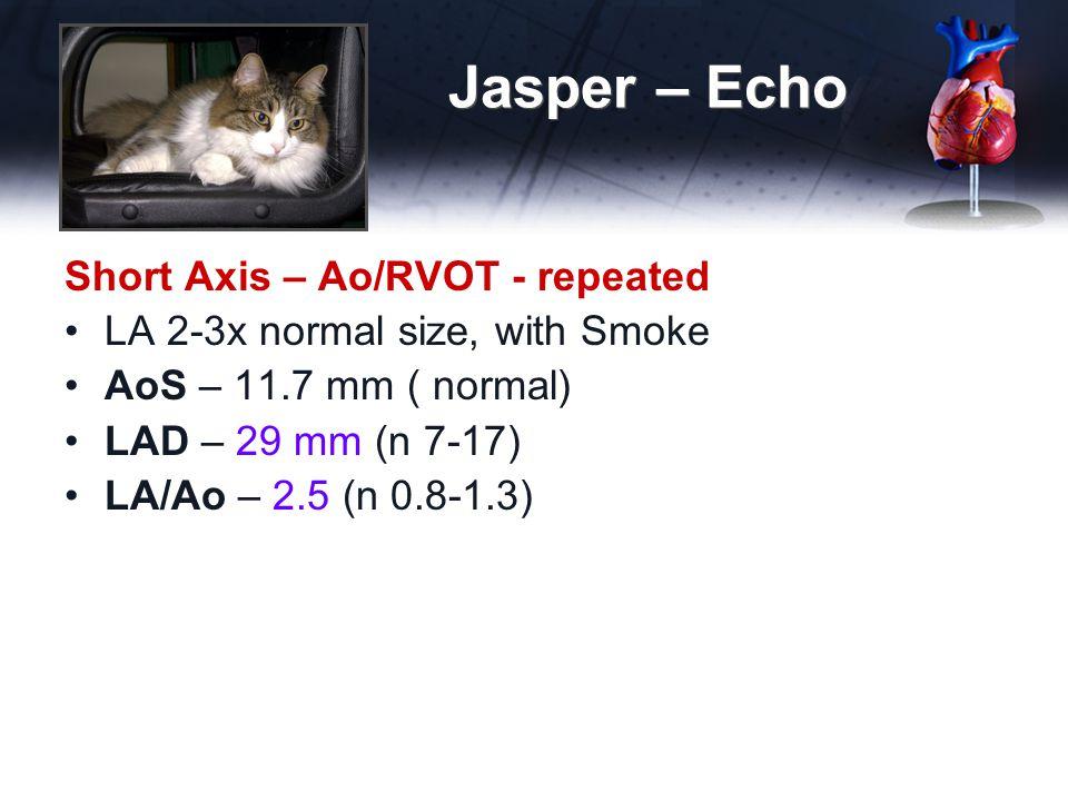 Jasper – Echo Short Axis – Ao/RVOT - repeated