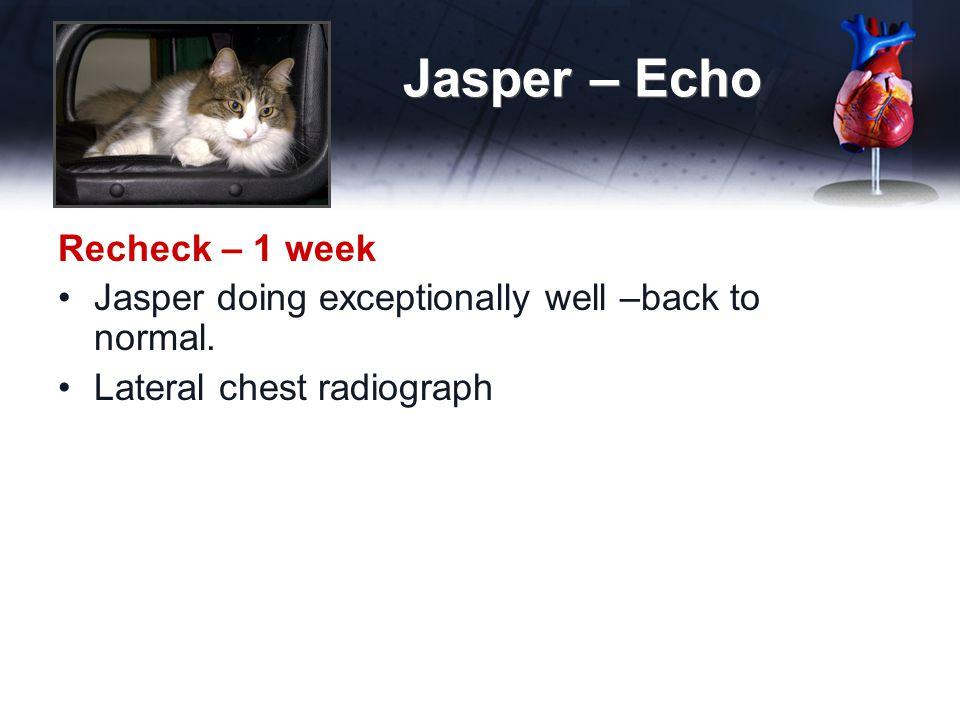 Jasper – Echo Recheck – 1 week