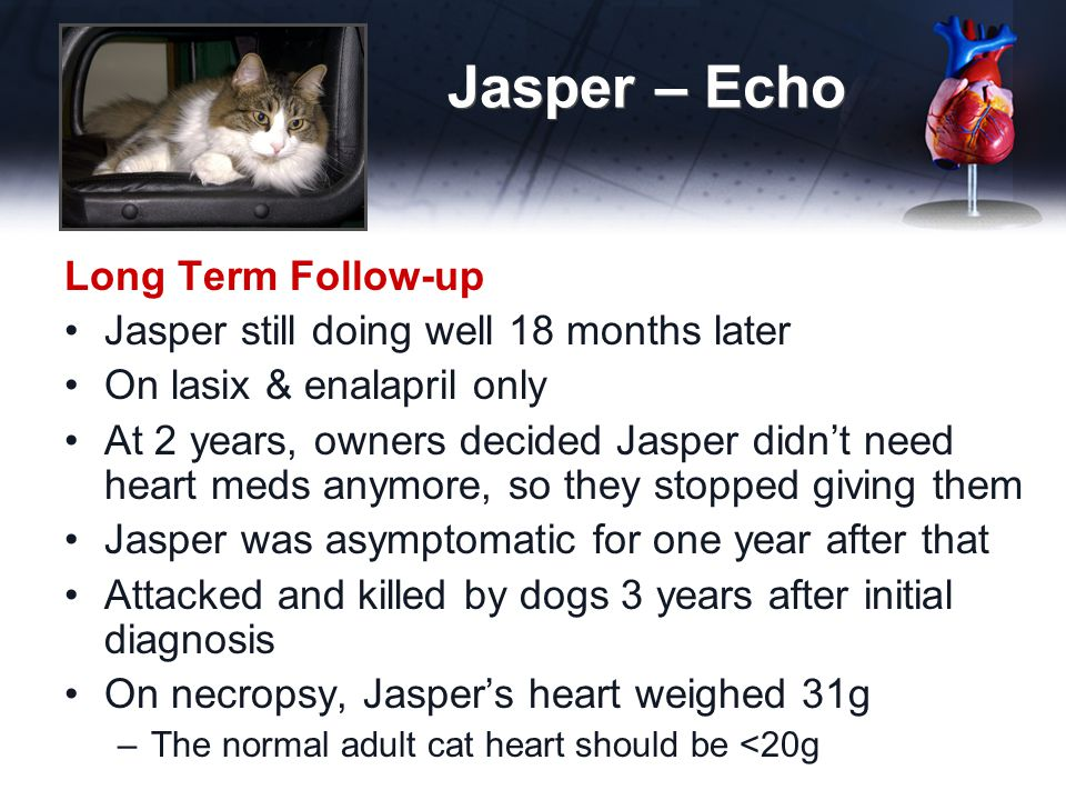 Jasper – Echo Long Term Follow-up