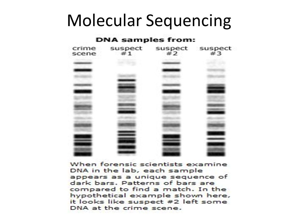 Molecular Sequencing