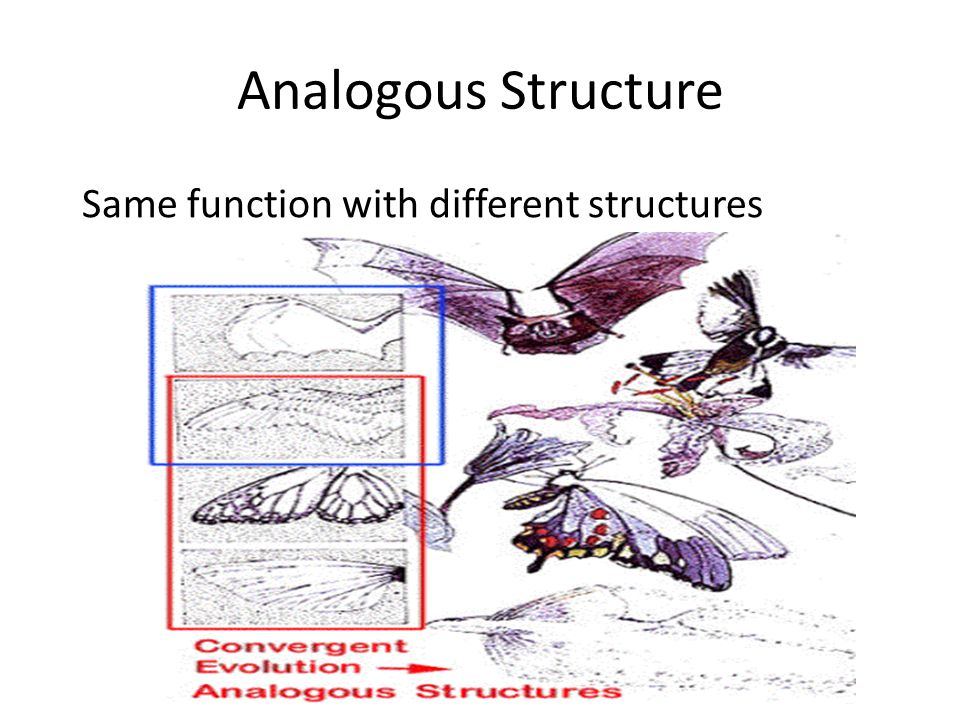 Analogous Structure Same function with different structures