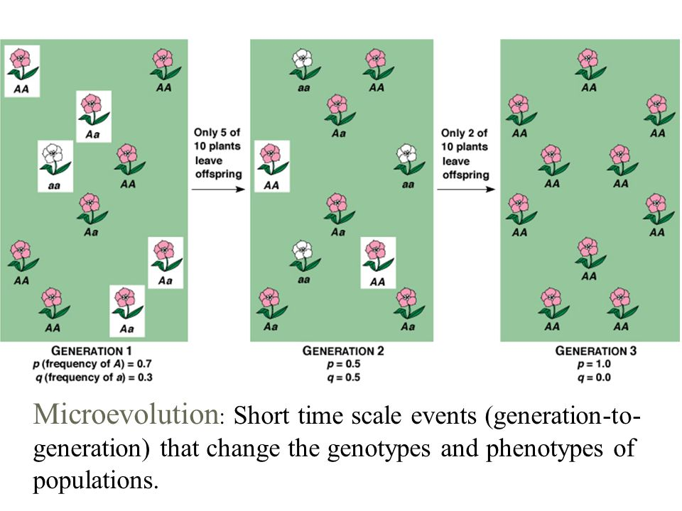 Evolutionary Time Scales