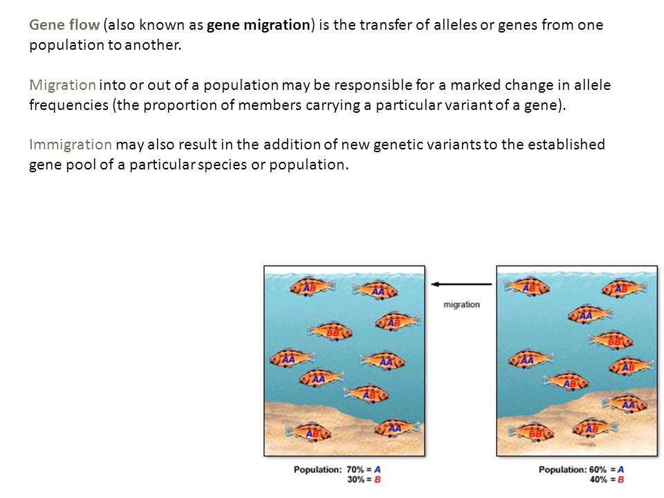 Gene flow (also known as gene migration) is the transfer of alleles or genes from one population to another.