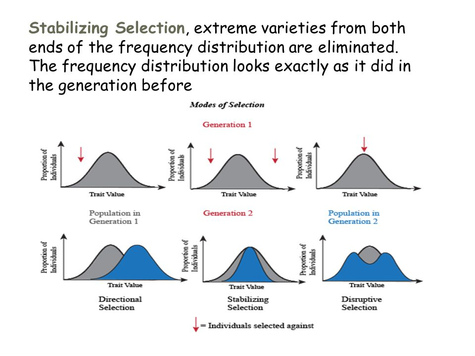 Stabilizing Selection, extreme varieties from both ends of the frequency distribution are eliminated.