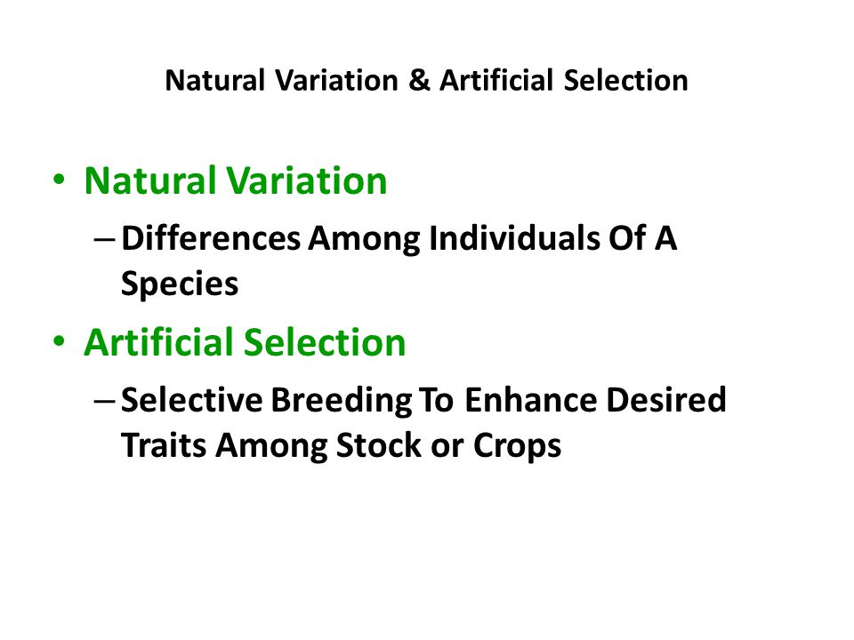 Natural Variation & Artificial Selection
