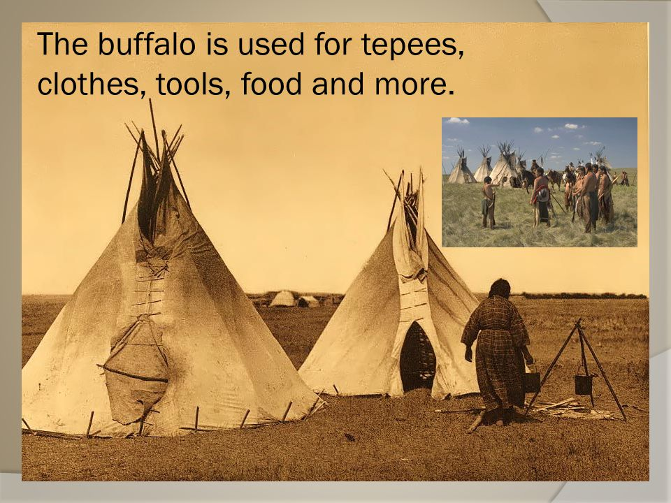 The buffalo is used for tepees, clothes, tools, food and more.