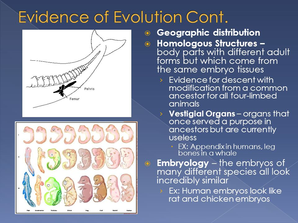Evidence of Evolution Cont.