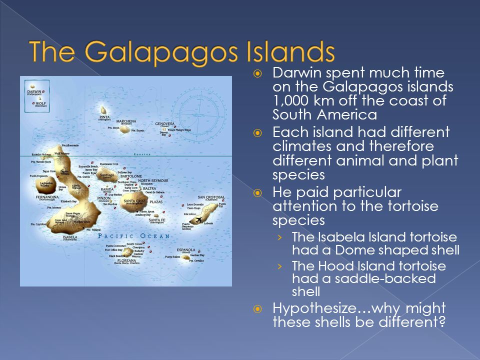 The Galapagos Islands Darwin spent much time on the Galapagos islands 1,000 km off the coast of South America.