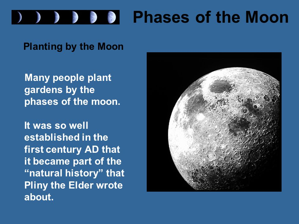 Planting by the Moon Many people plant gardens by the phases of the moon.