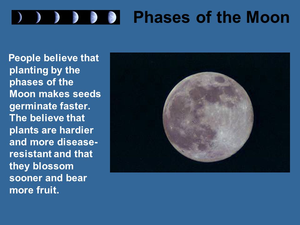 People believe that planting by the phases of the Moon makes seeds germinate faster. The believe that plants are hardier and more disease-resistant and that they blossom sooner and bear more fruit.
