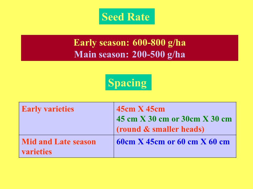 Seed Rate Spacing Early season: 600-800 g/ha Main season: 200-500 g/ha
