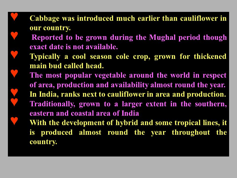Cabbage was introduced much earlier than cauliflower in our country.