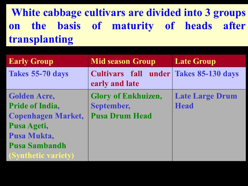 White cabbage cultivars are divided into 3 groups on the basis of maturity of heads after transplanting