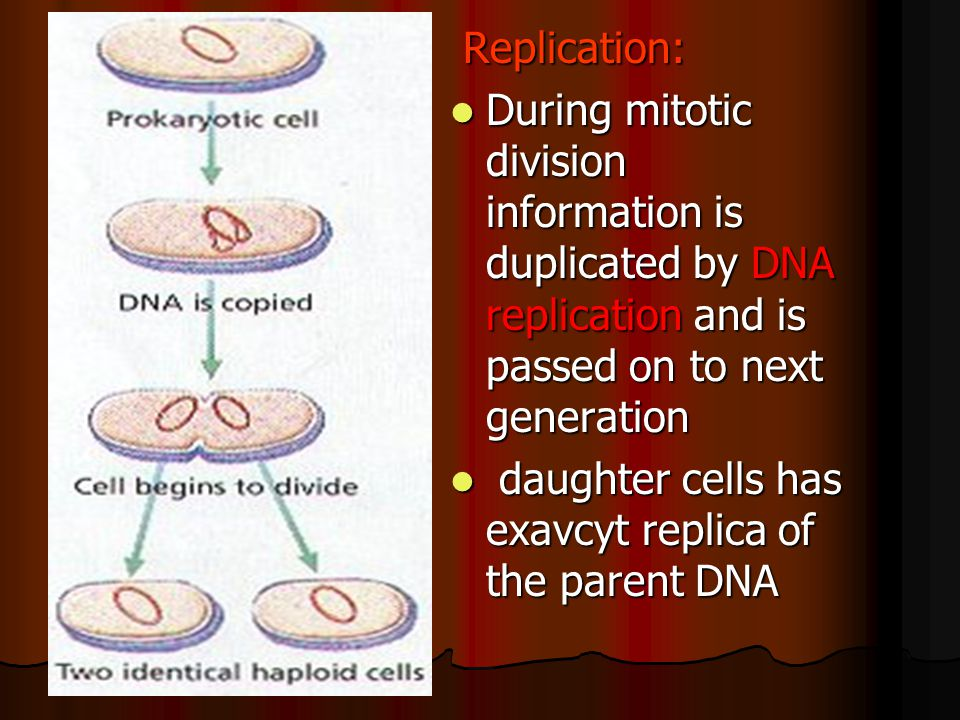 Replication: During mitotic division information is duplicated by DNA replication and is passed on to next generation.