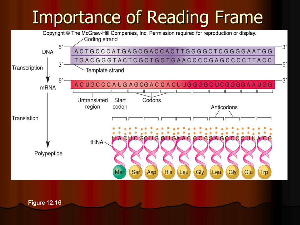 Importance of Reading Frame