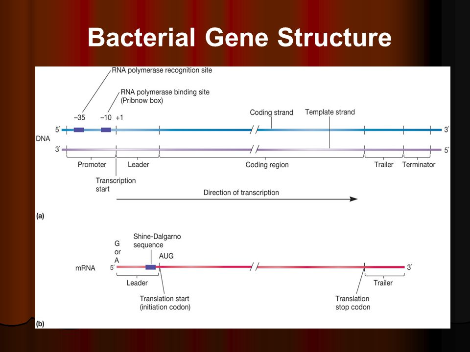 Genes: Structure Replication and Expression - ppt video ...