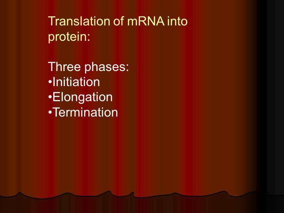 Translation of mRNA into protein: