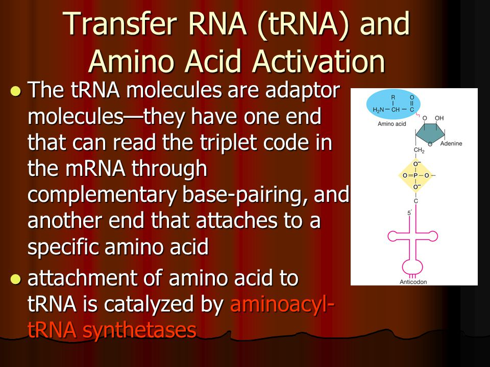 Transfer RNA (tRNA) and Amino Acid Activation