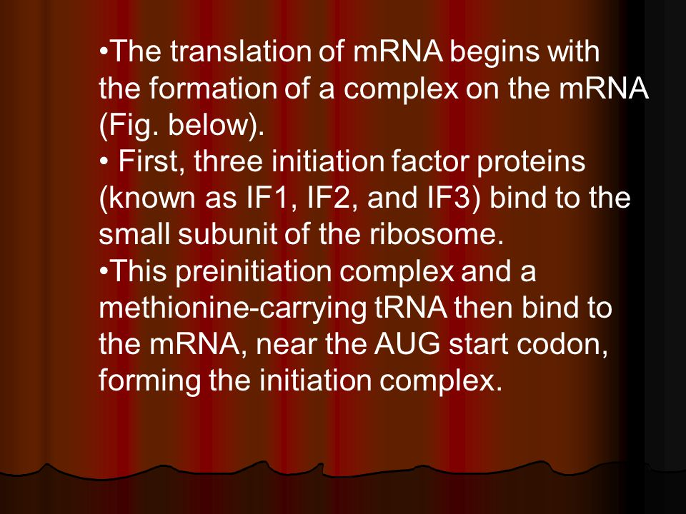 The translation of mRNA begins with the formation of a complex on the mRNA (Fig. below).
