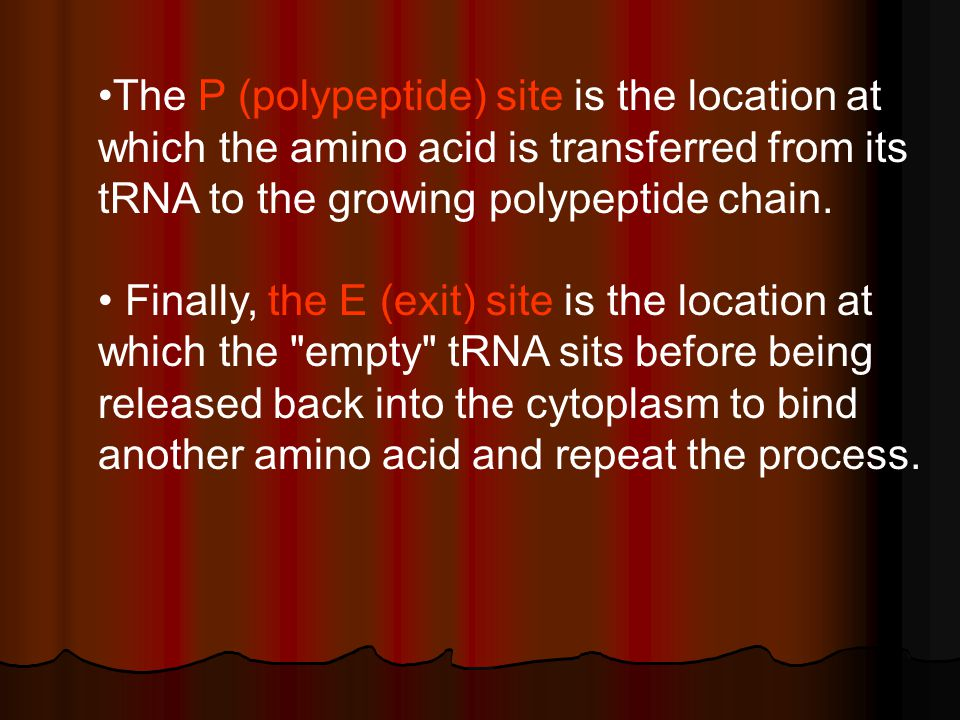The P (polypeptide) site is the location at which the amino acid is transferred from its tRNA to the growing polypeptide chain.