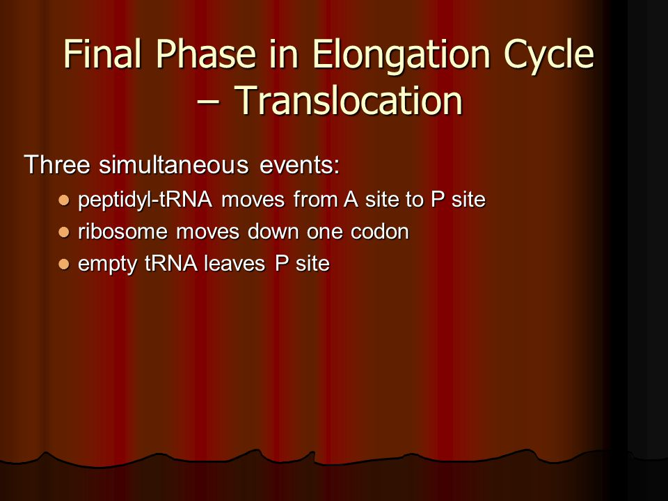 Final Phase in Elongation Cycle − Translocation
