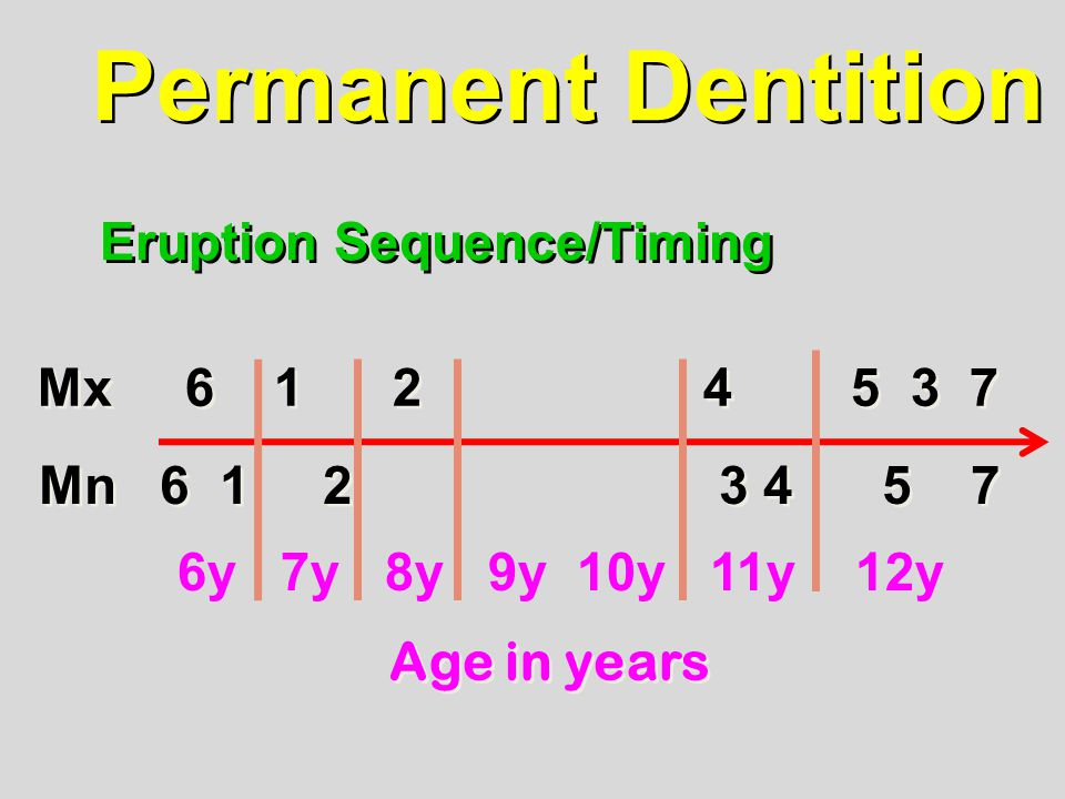 Permanent Dentition Eruption Sequence/Timing Mx 6 1 2 4 5 3 7