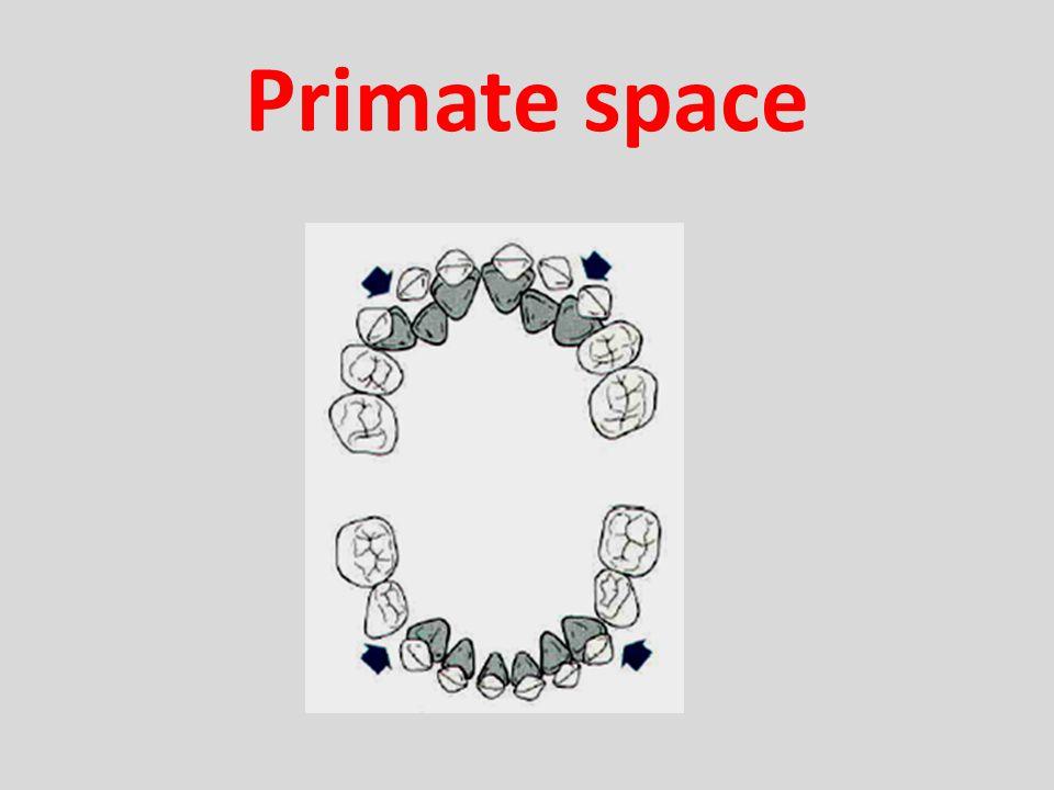 Primate space