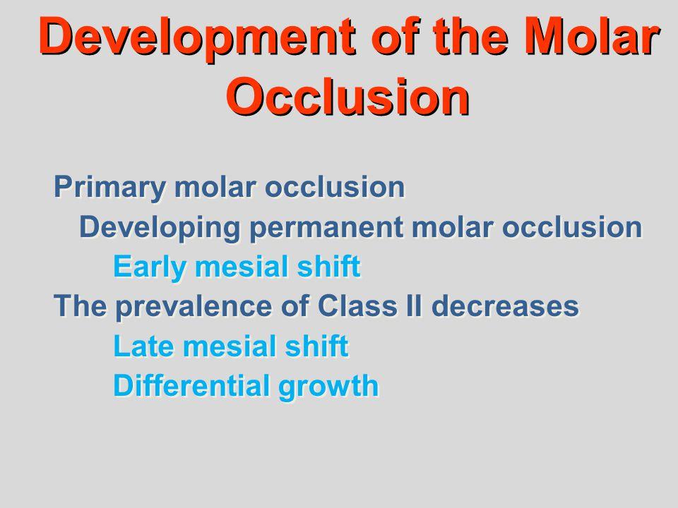 Development of the Molar Occlusion