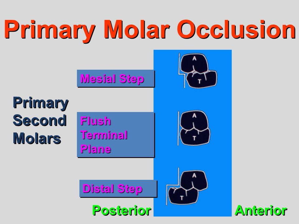 Primary Molar Occlusion