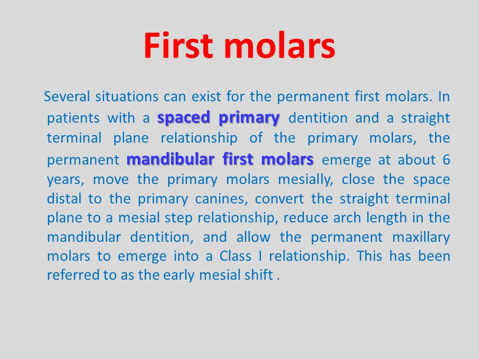 First molars