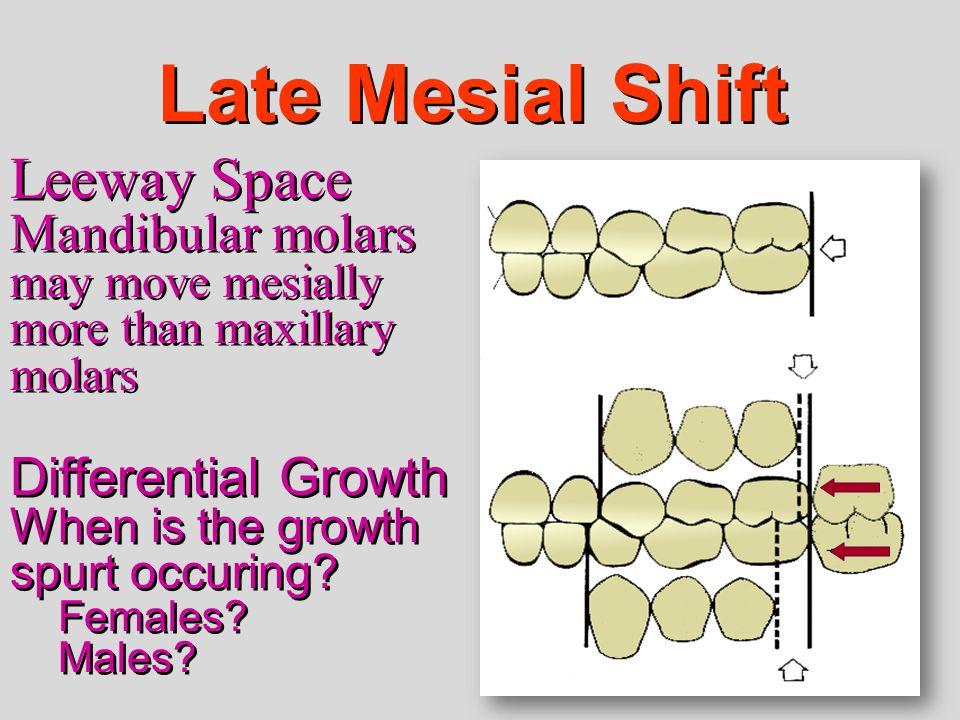 Late Mesial Shift Leeway Space