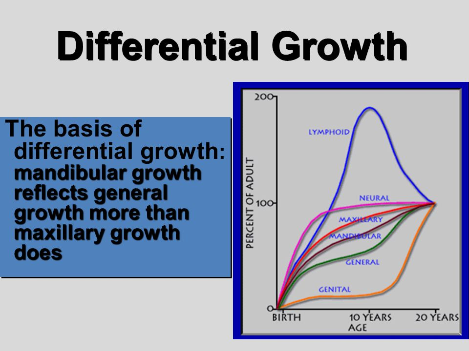 Differential Growth The basis of differential growth: