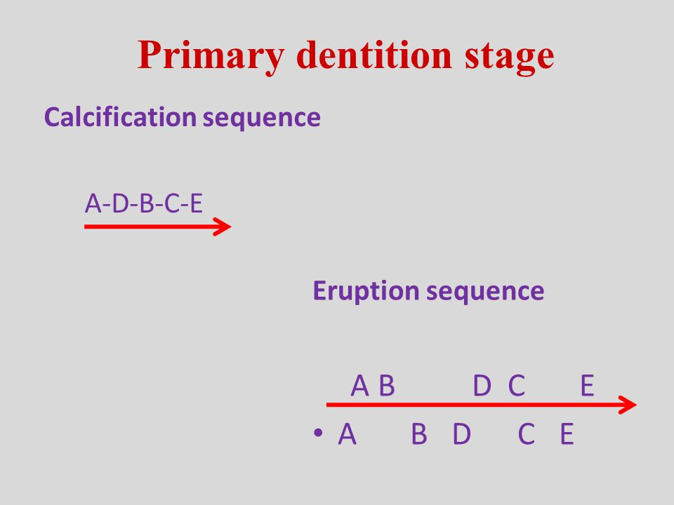 Primary dentition stage